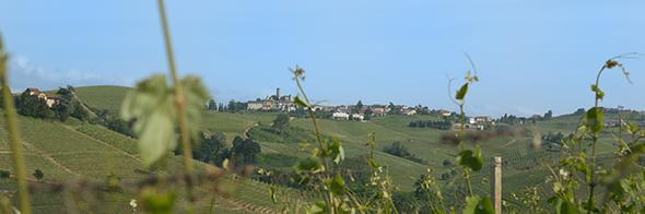 Piemont_Weinberg_590_196