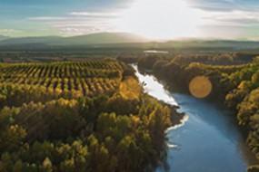 Wein des Monats August mit 15% Rabatt: Köstlich-fruchtiger Bagordi Tinto Cosecha