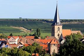 Wein des Monats Mai 2017 mit 17% Rabatt: 2015er Kassner-Simon Auxerrois Q.b.A. trocken