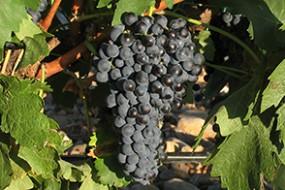Neu bei divino Weinhandel: Ochoa Tempranillo Crianza D.O. Navarra