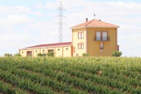 Wein des Monats Juli mit 16% Rabatt: Sommerlicher Otero Finca Valleoscuro Tinto aus Benavente!