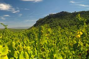 Neu bei divino Weinhandel: Parés Baltà Origen Blanc de Pacs D.O. Penedès
