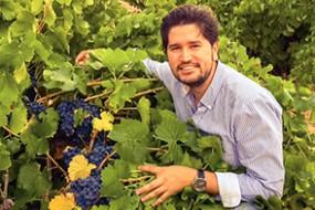 Wein des Monats November 2018 mit 15% Rabatt: Rejadorada Reja Tinto Joven D.O. Toro