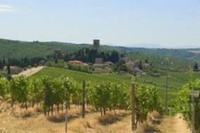 divino auf Winzerbesuch in Italien | Chianti-Classico-Angebot für alle Daheimbleibenden!