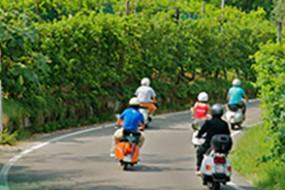 Wein des Monats März 2015: 2013er Specogna Friulano D.O.C. Colli Orientali del Friuli