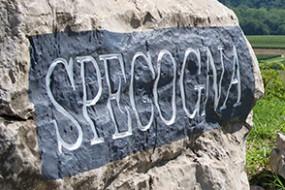 Wein des Monats April 2017 mit 16% Rabatt: 2015 Specogna Sauvignon D.O.C. Colli Orientali del Friuli