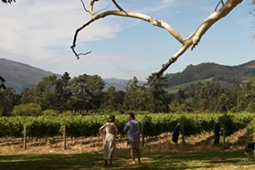 Wein des Monats Dezember mit 20% Rabatt: 2013 Stony Brook Vineyards The Max