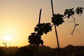 Wein des Monats Februar 2019: Teanum Vento Rosso mit 16% Rabatt
