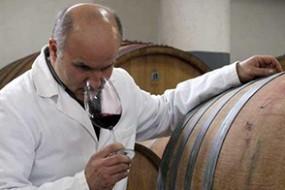 Wein des Monats mit 14% Rabatt: Edler Terre di Orazio Aglianico del Vulture von der Cantina di Venosa