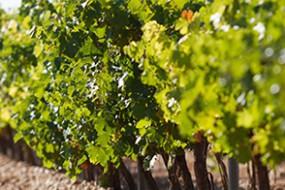 Wein des Monats Juli 2017: Oro de Castilla Verdejo D.O. Rueda von Hermanos del Villar