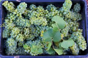 Wein des Monats August mit 15% Rabatt: Probierpaket Nr. 71